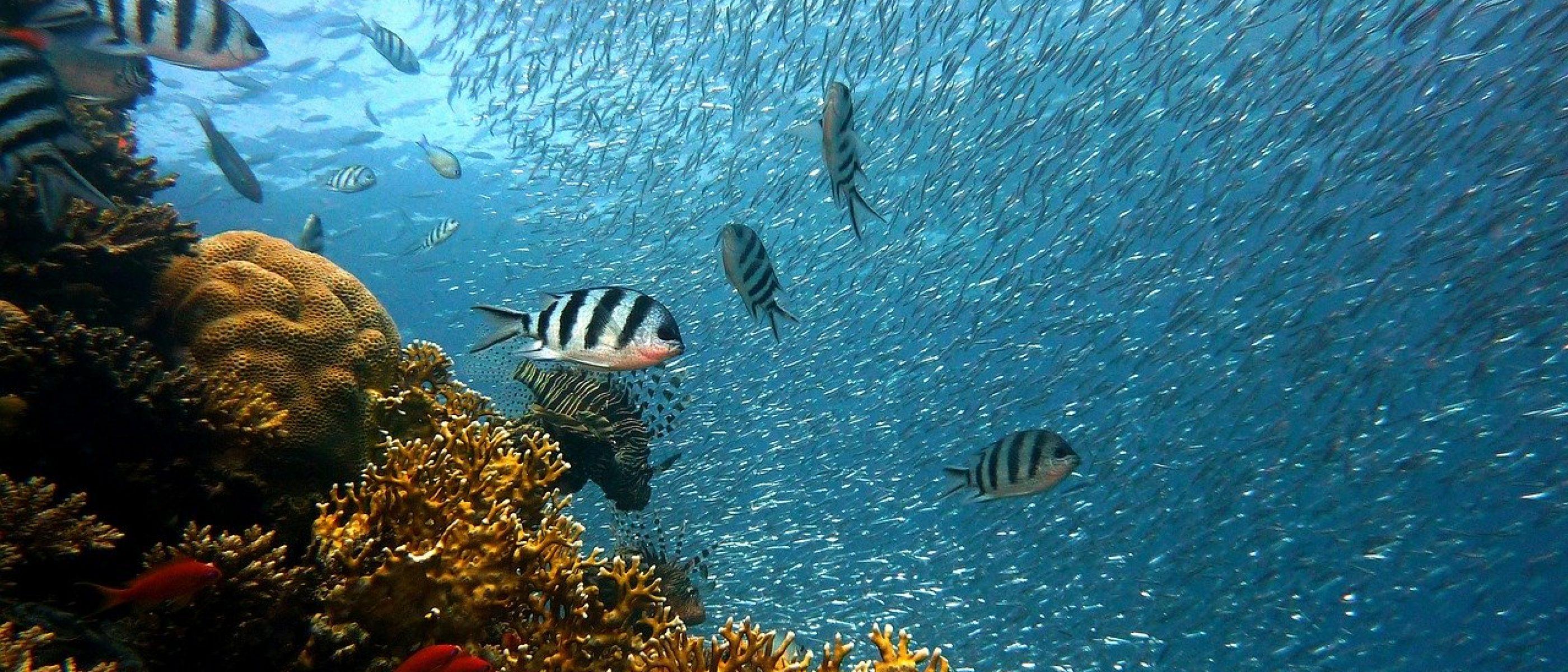 fish 378286 - 1280